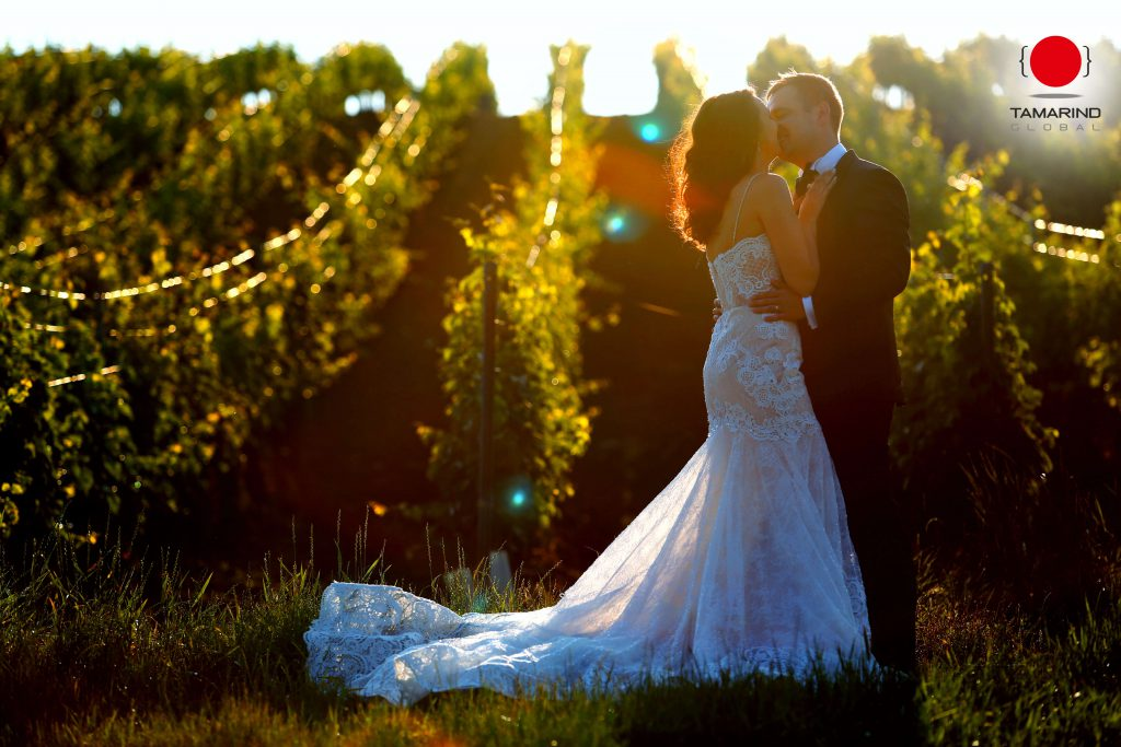 How To Plan The Perfect Vineyard Wedding